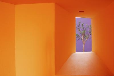Colorful Architecture in Cabo San Lucas-Daniel J. Cox-Photographic Print