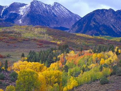 Colorful Aspens in Logan Canyon, Utah, USA-Julie Eggers-Photographic Print
