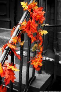 Colorful Autumn Leaves on Railing