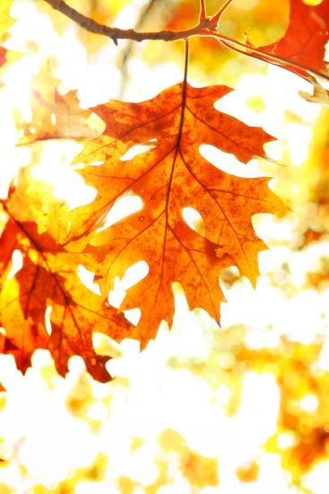 Colorful Autumn Leaves-soupstock-Photographic Print