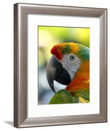 Colorful Bird Parrot Animal-Wonderful Dream-Framed Art Print