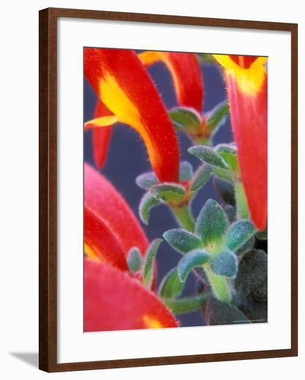 Colorful Blossoms and Leaves, North Carolina, USA-Brent Bergherm-Framed Photographic Print