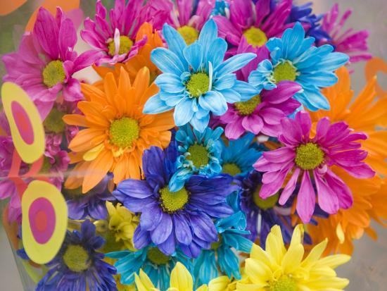 Colorful Bouquet of Flowers, Lincoln, Nebraska-Joel Sartore-Photographic Print