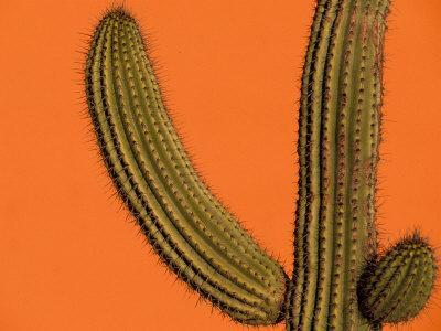 https://imgc.artprintimages.com/img/print/colorful-cactus-details-mexico_u-l-pxpv7w0.jpg?p=0