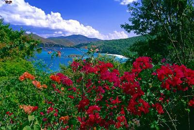 Colorful Caribbean View, St John, Virgin Islands-George Oze-Photographic Print