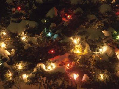 https://imgc.artprintimages.com/img/print/colorful-christmas-fairy-lights-on-a-snow-covered-evergreen-tree_u-l-q10x9qy0.jpg?p=0