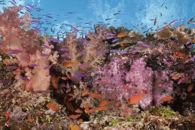 Colorful Fiji Coral Reef-Reinhard Dirscherl-Photographic Print