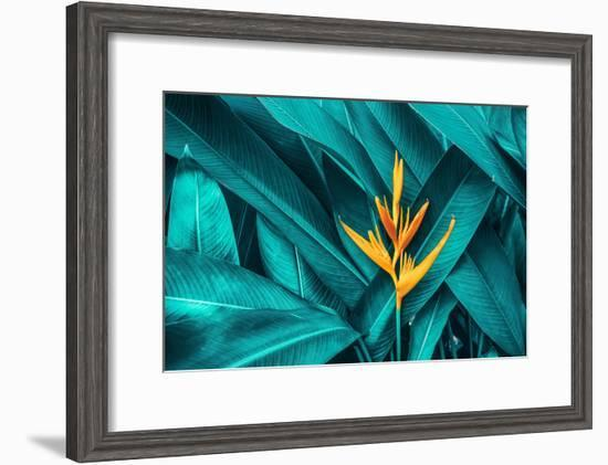 Colorful Flower on Dark Tropical Foliage Nature Background--Framed Premium Photographic Print