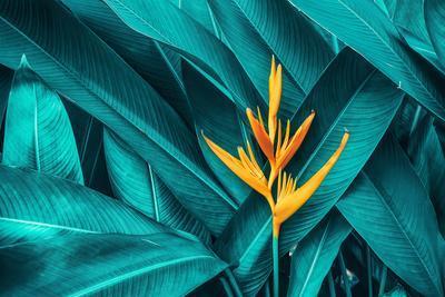 https://imgc.artprintimages.com/img/print/colorful-flower-on-dark-tropical-foliage-nature-background_u-l-q1gek150.jpg?p=0