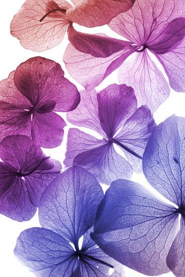 Colorful Flower Petal Closeup-maaram-Art Print