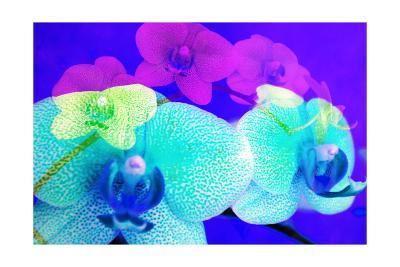 Colorful Orchids VI-Alaya Gadeh-Art Print