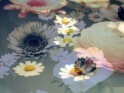 Colorful Photographic Layer Work of Blossoms-Alaya Gadeh-Photographic Print