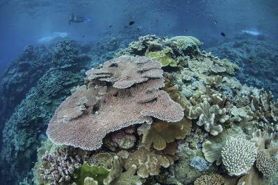 Colorful Reef-Building Corals Grow on a Reef in the Solomon Islands-Stocktrek Images-Photographic Print