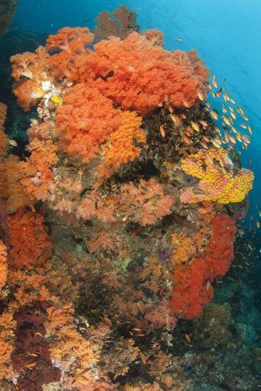 Colorful Reefs Covered in Orange Dendronephthya Soft Corals--Photographic Print