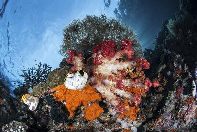 Colorful Soft Corals Grow on a Reef Dropoff in Raja Ampat-Stocktrek Images-Photographic Print