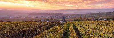 Colorful Sunrise over the Vineyards of Ville Dommange, Champagne Ardenne, France-Matteo Colombo-Photographic Print