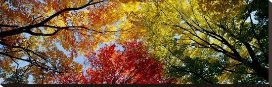 colorful-trees-in-fall-autumn-low-angle-view