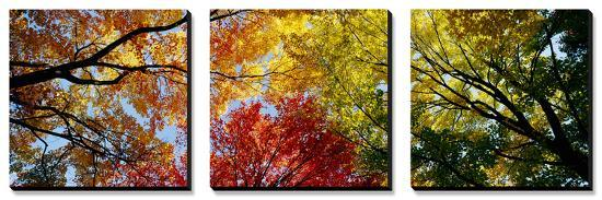 Colorful Trees in Fall, Autumn, Low Angle View--Canvas Art Set