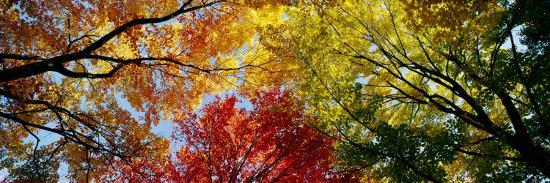 Colorful Trees in Fall, Autumn, Low Angle View--Photographic Print