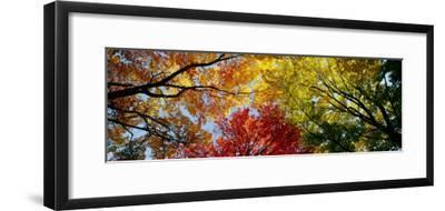 Colorful Trees in Fall, Autumn, Low Angle View--Framed Photographic Print