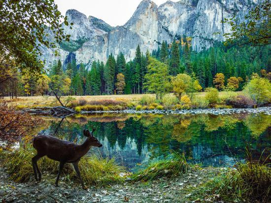 Colorful Trees, Rugged Mountains and a Browsing Deer in a Scenic Autumn Landscape-Babak Tafreshi-Photographic Print