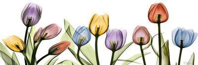 https://imgc.artprintimages.com/img/print/colorful-tulip-scape_u-l-f547yz0.jpg?p=0