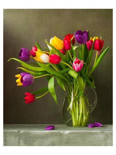 Colorful Tulips Still Life--Art Print