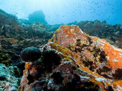 Colorful Underwater Scene, Fatu Hiva Island, French Polynesia-Tim Laman-Photographic Print