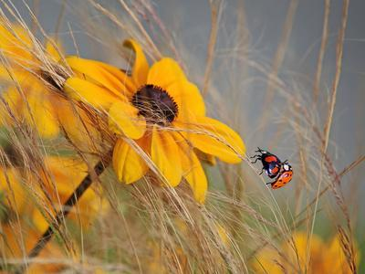 Colors of Summer-Anna Cseresnjes-Photographic Print
