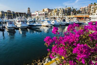 Colourful Flowers in the Harbour of Los Cabos, Baja California, Mexico, North America-Michael Runkel-Photographic Print
