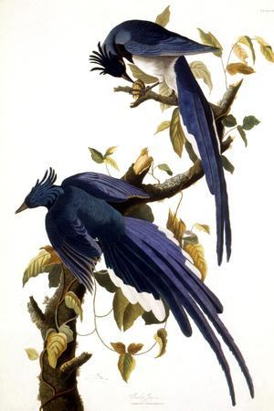 https://imgc.artprintimages.com/img/print/columbia-jay-1830_u-l-q1g8dpk0.jpg?p=0