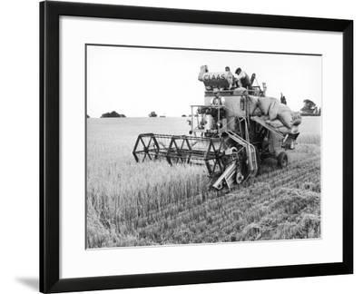 Combining Barley--Framed Photographic Print