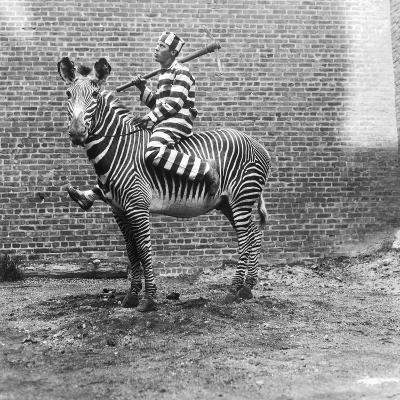 Comic Criminal Riding a Zebra--Photographic Print