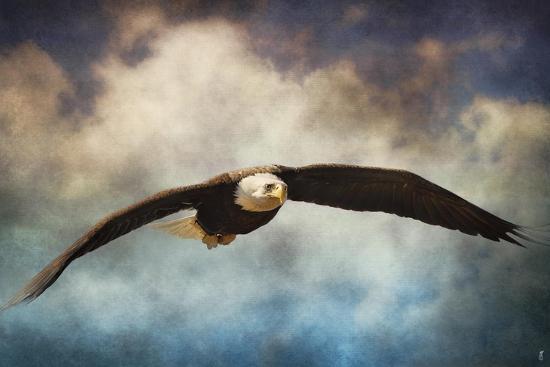 Coming Home Bald Eagle-Jai Johnson-Giclee Print