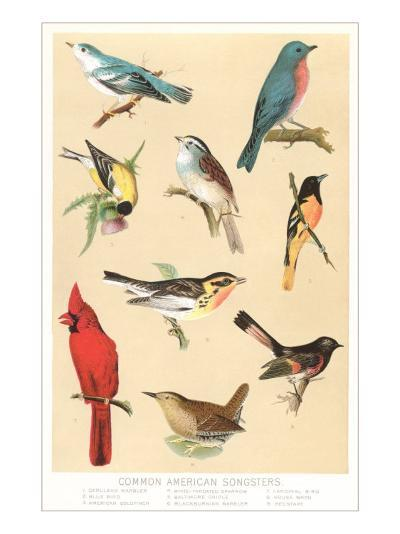 Common American Songbirds--Art Print