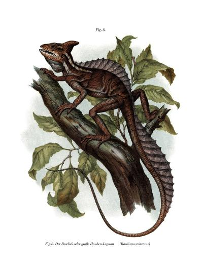 Common Basilisk--Giclee Print