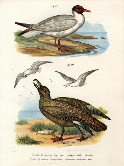 Common Black-Headed Gull, 1864--Giclee Print