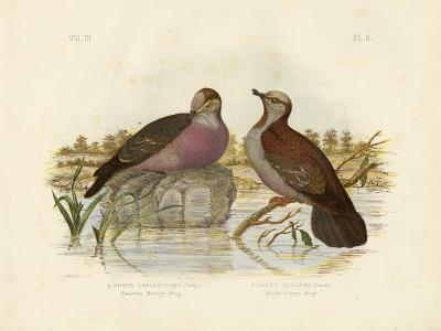 Common Bronzewing, 1891-Gracius Broinowski-Giclee Print