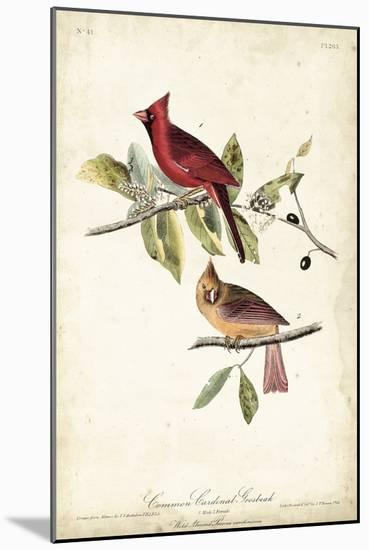 Common Cardinal Grosbeak-John James Audubon-Mounted Art Print