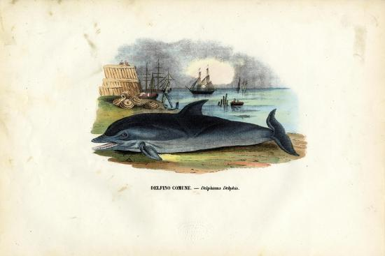 Common Dolphin, 1863-79-Raimundo Petraroja-Giclee Print