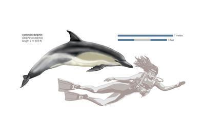 https://imgc.artprintimages.com/img/print/common-dolphin-delphinus-delphis-mammals_u-l-q135la50.jpg?p=0