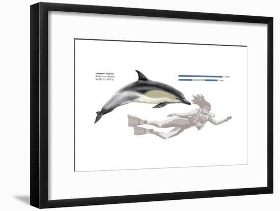 Common Dolphin (Delphinus Delphis), Mammals-Encyclopaedia Britannica-Framed Art Print
