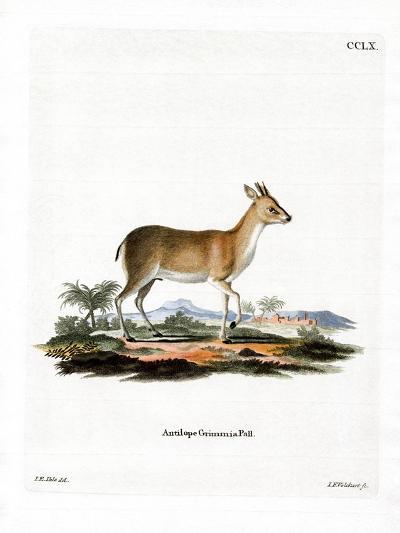 Common Duiker--Giclee Print
