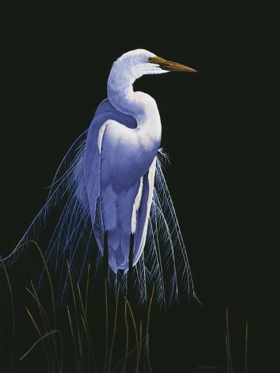 Common Egret in Breeding Plumage-Michael Budden-Giclee Print