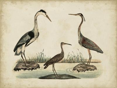 Common Heron and Crested Purple Heron-Friedrich Strack-Art Print