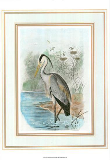 Common Heron--Art Print