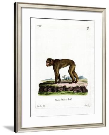 Common Macaque--Framed Giclee Print