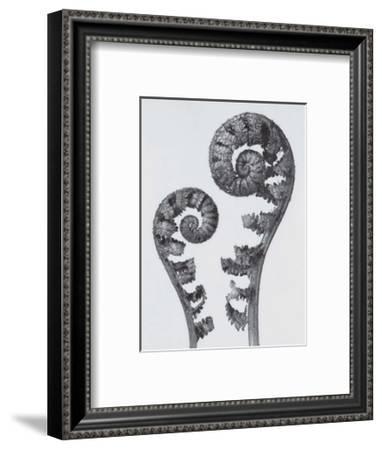 Common Male Fern-Karl Blossfeldt-Framed Art Print