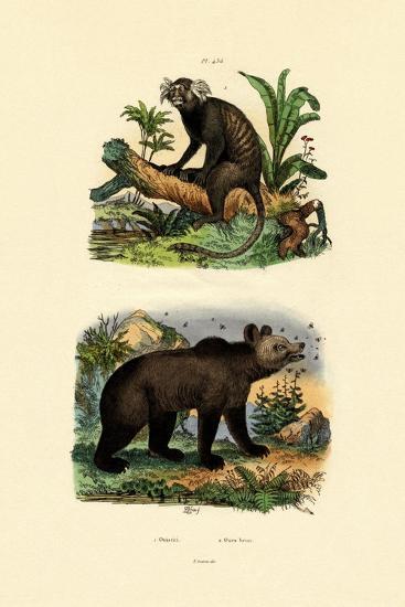 Common Marmoset, 1833-39--Giclee Print
