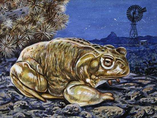 Common Midwife Toad (Alytes Obstetricans), Alytidae, Drawing--Giclee Print